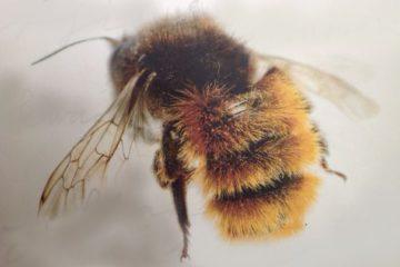 Meer bloemen en bijen in Castricum