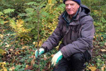 Peter Mol plant een wilgenstruik